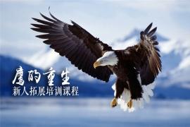鹰的重生-新人拓展培训课程